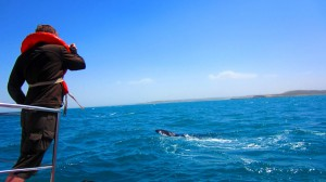 Puerto Madryn - Whale Watching