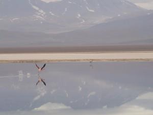Parque Nacional Nevado Tres Cruces - Flamingos Laguna Santa Rosa