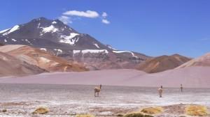 Parque Nacional Nevado Tres Cruces - Vikunjas