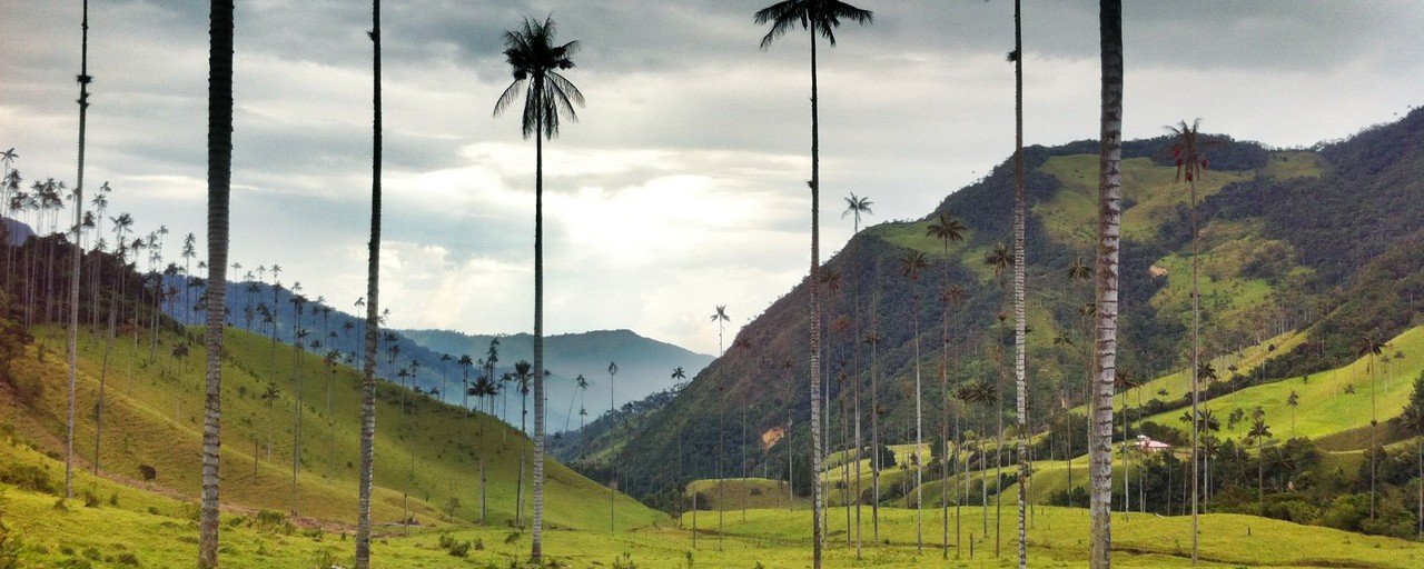 Colombia - Salento: Cocora Valley with its famous wax palms