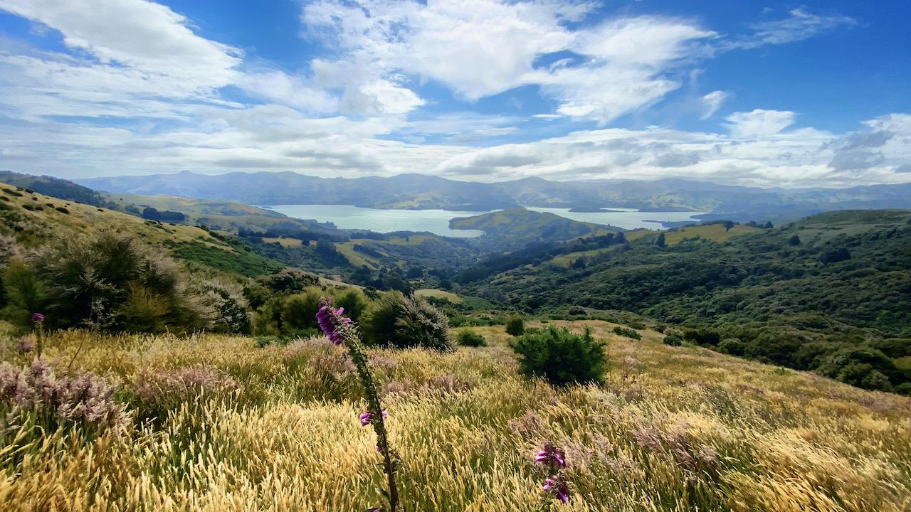 Wanderung auf der Akaroa-Halbinsel, Canterbury, Neuseeland (26.12.2020)