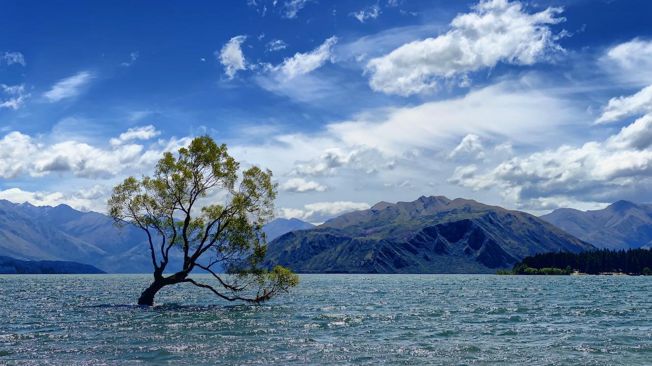 Baum im Wasser bei Wanaka, Otago, Neuseeland (12.01.2020)